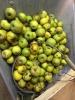 donne des pommes